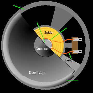 Cross section of speaker